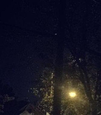 rockaway-night-tree