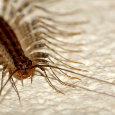 The One Thing You Really, Really Shouldn't Do If You Hate House Centipedes