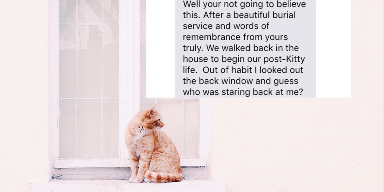This Family Buried Their Cat In A Tearful Ceremony, But Then She Reappeared In TheirBackyard…