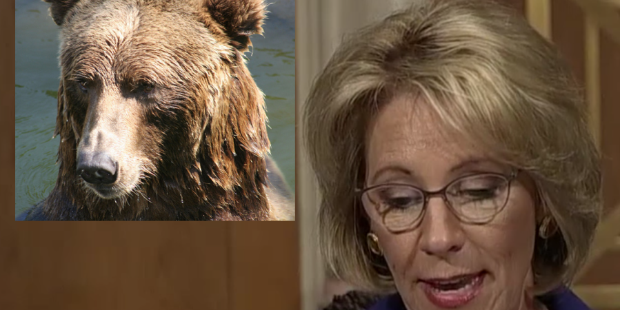 Betsy DeVos Is Right, The Greatest Threat To Our Children Is Bear Attacks