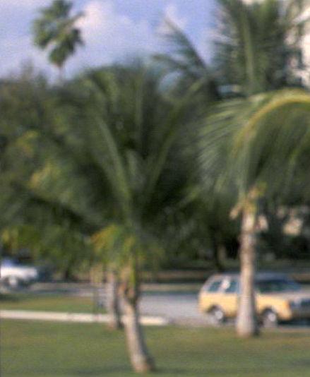 1981-fll-palms-street