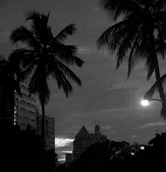 1981-night-palms