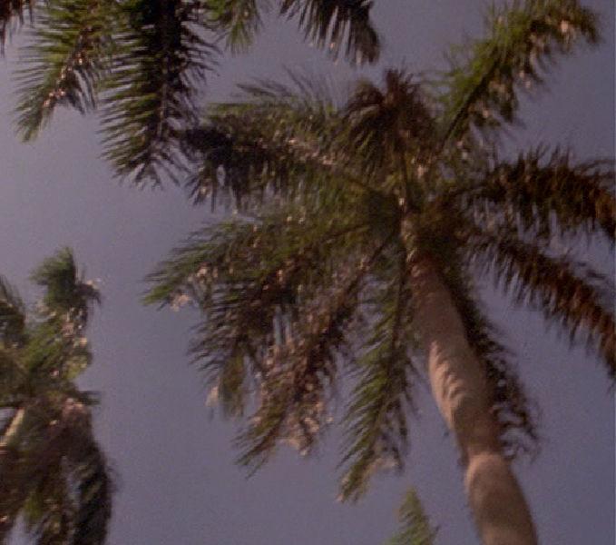 mv-palms-from-below-2