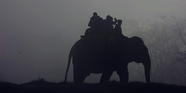 The Unedited Truth Behind Elephant Tourism In Asia And The Importance Of EducatingYourself