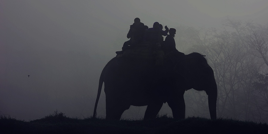 The Unedited Truth Behind Elephant Tourism In Asia And The Importance Of Educating Yourself