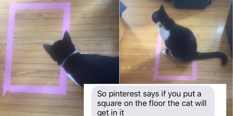 This Girl Found The Weirdest Way To Mess With Your Cat And It's Freaking Everyone TF Out OnTwitter