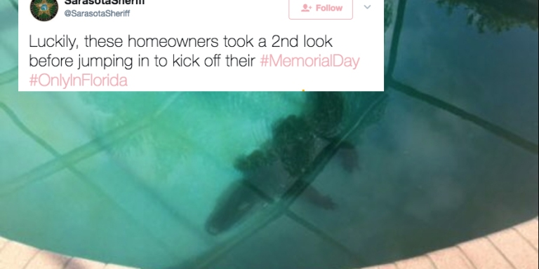 This Family Found An Alligator In Their Swimming Pool And It's Just Another Reason No One Should Live InFlorida