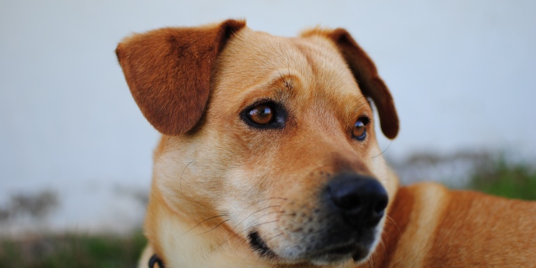 Why We Need To Stop Shaming People For Buying Their Dogs Instead OfAdopting