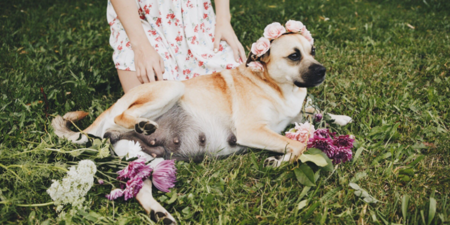 This Woman's Maternity Shoot For Her 'Best Friend' Is Super Extra And Everyone On Twitter Is LovingIt