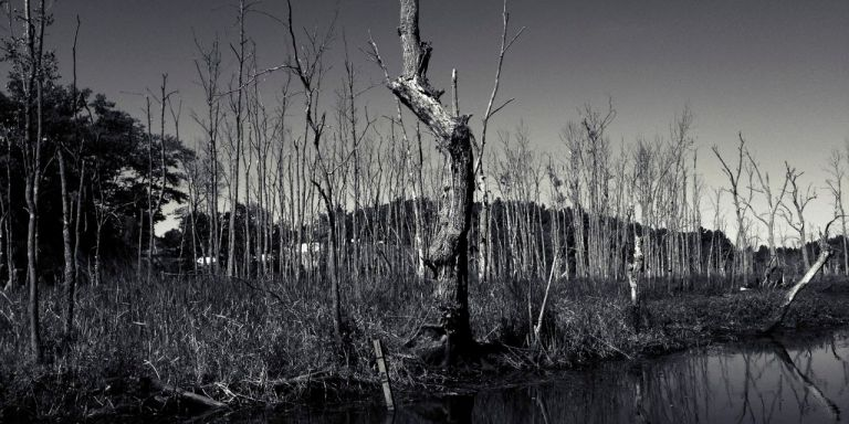 I Thought I Was All Alone In The Wilderness: 18 Super-CreepyEncounters