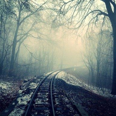 Dark creepy woods