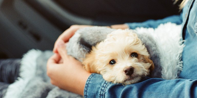 How A Dog Helped Me Manage My Anxiety AndDepression