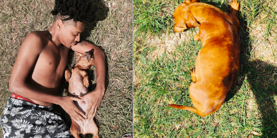 This Man Had A Maternity Photoshoot For His Dog And People On Twitter Are In Love