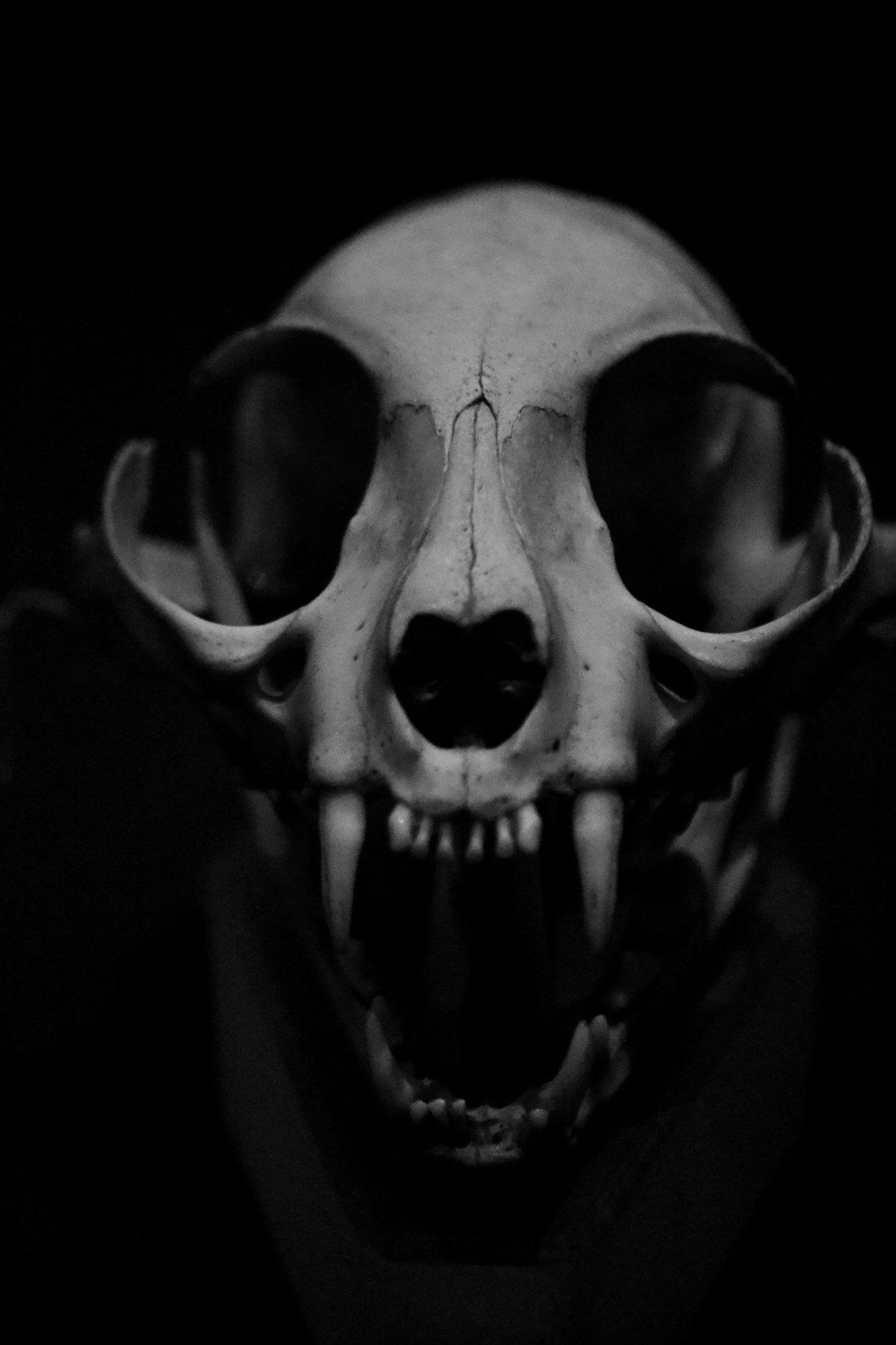 A scary skull