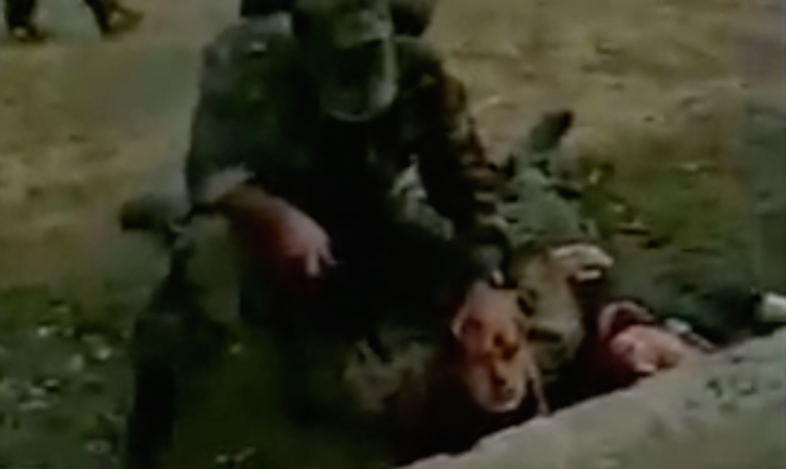 5 Real Videos Of People Being Murdered That Will Destroy Your Faith In Humanity