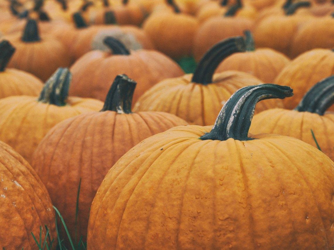 Pumpkins at a pumpkin patch