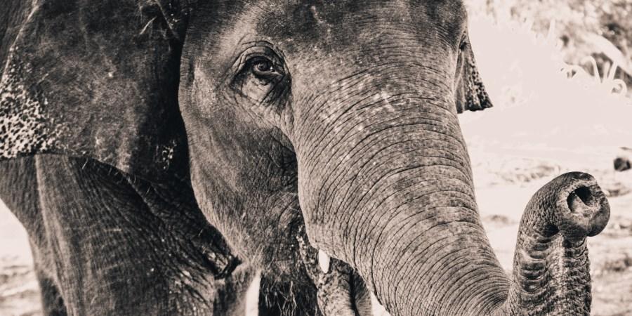 What Elephants Teach AboutHeartbreak