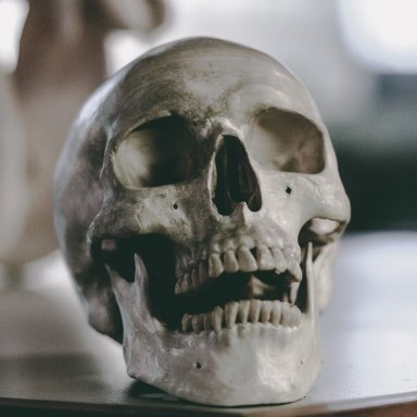 Skull that suffered a brutal death
