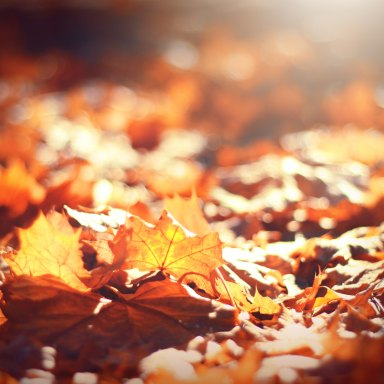 Like The Leaves In Autumn, Letting Go Can Be Beautiful