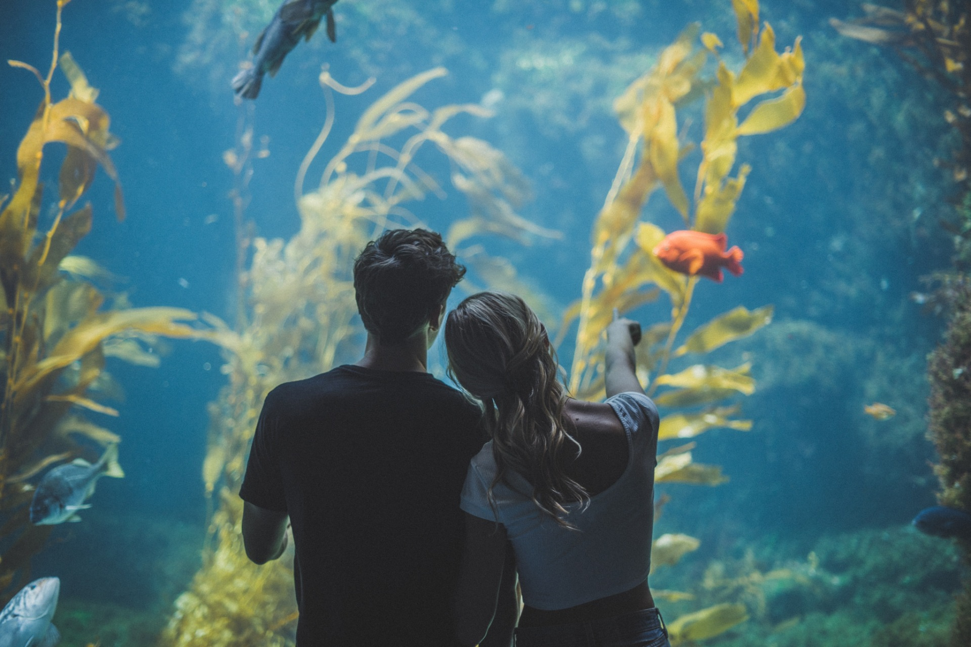 couple at a fish tank looking in