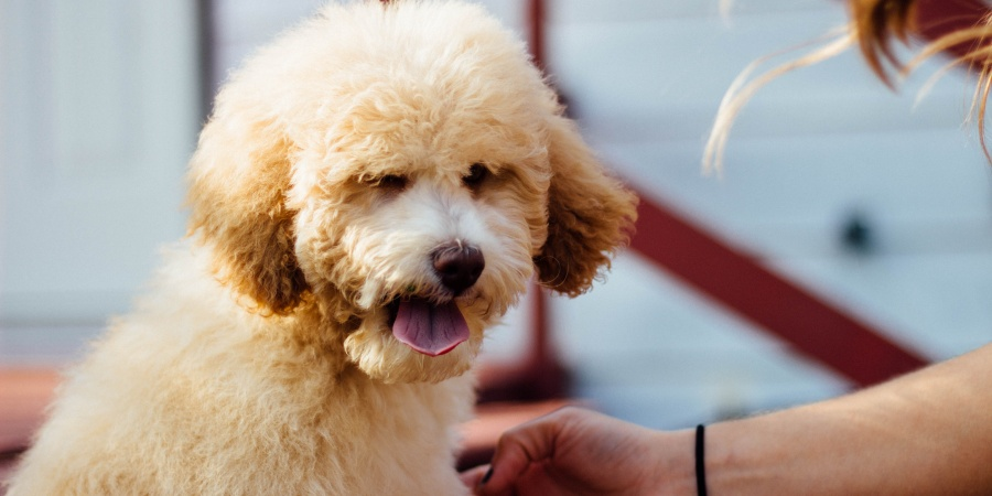 5 Too Real Reasons Why Your Dog Is Better Than A Significant Other Ever WillBe