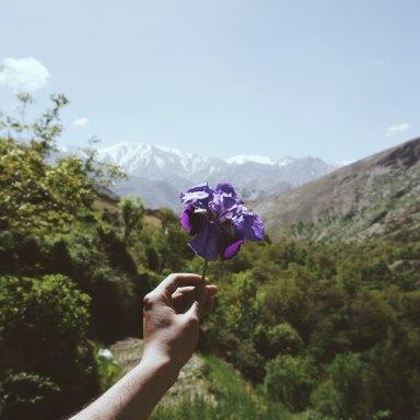 hand holding purple flower