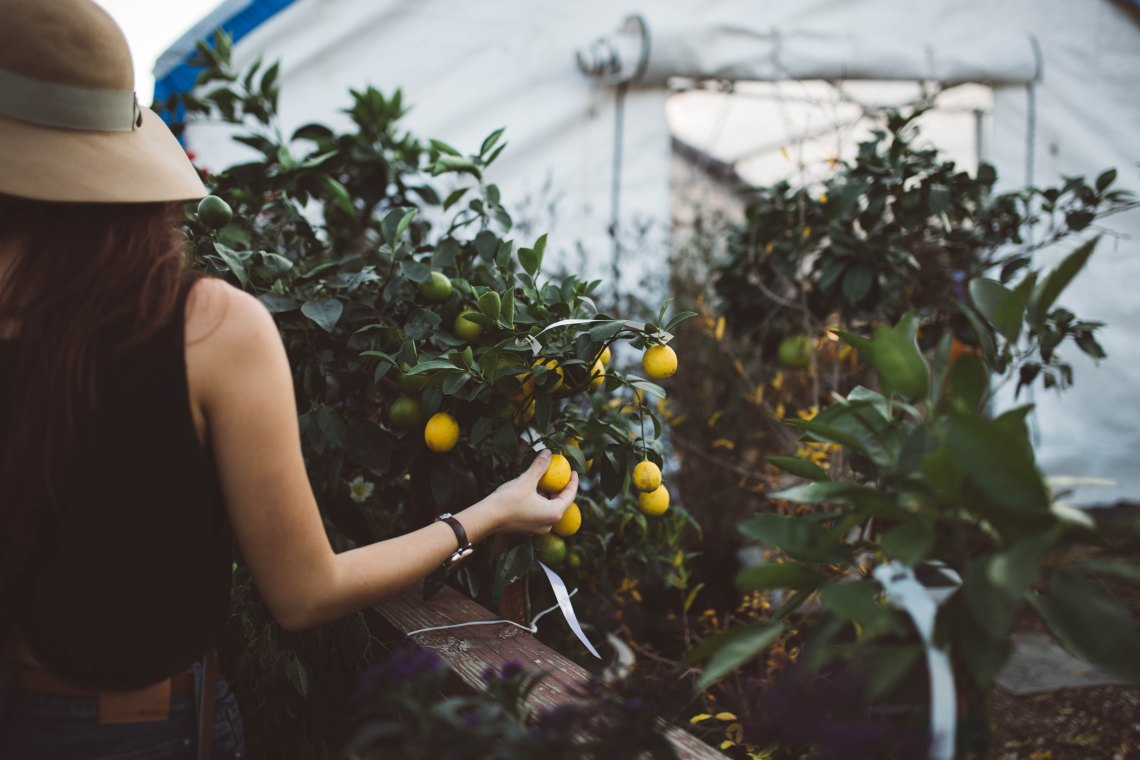How To Heal When Life Gives You Lemons