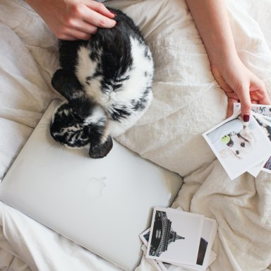 Pet laying on computer in bed