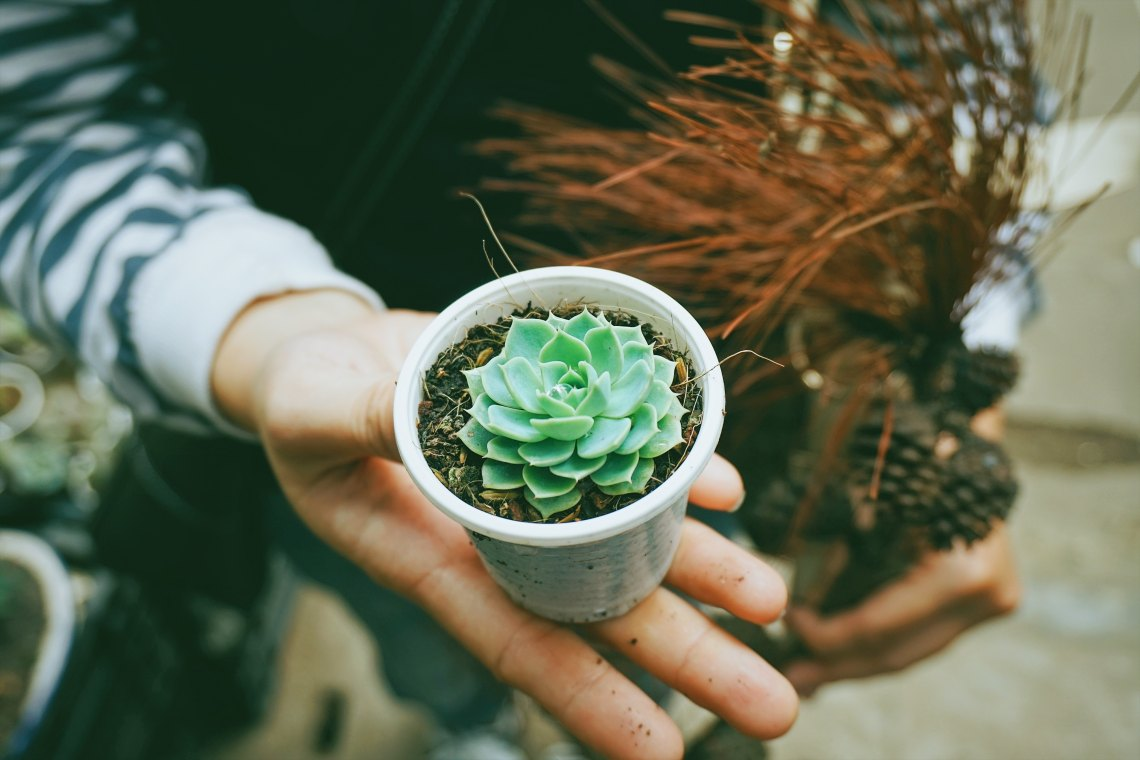 10 Reasons To Choose Plants Over People