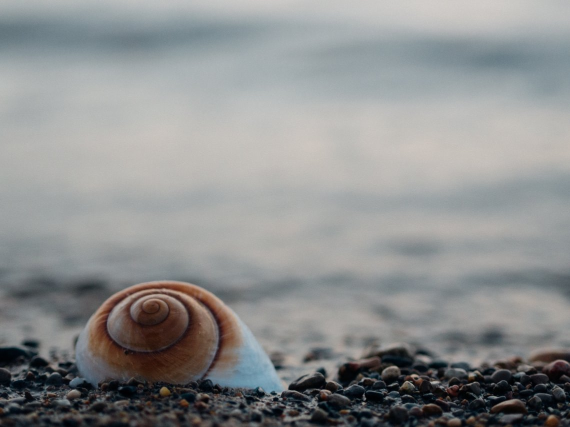 A seashell on a shore
