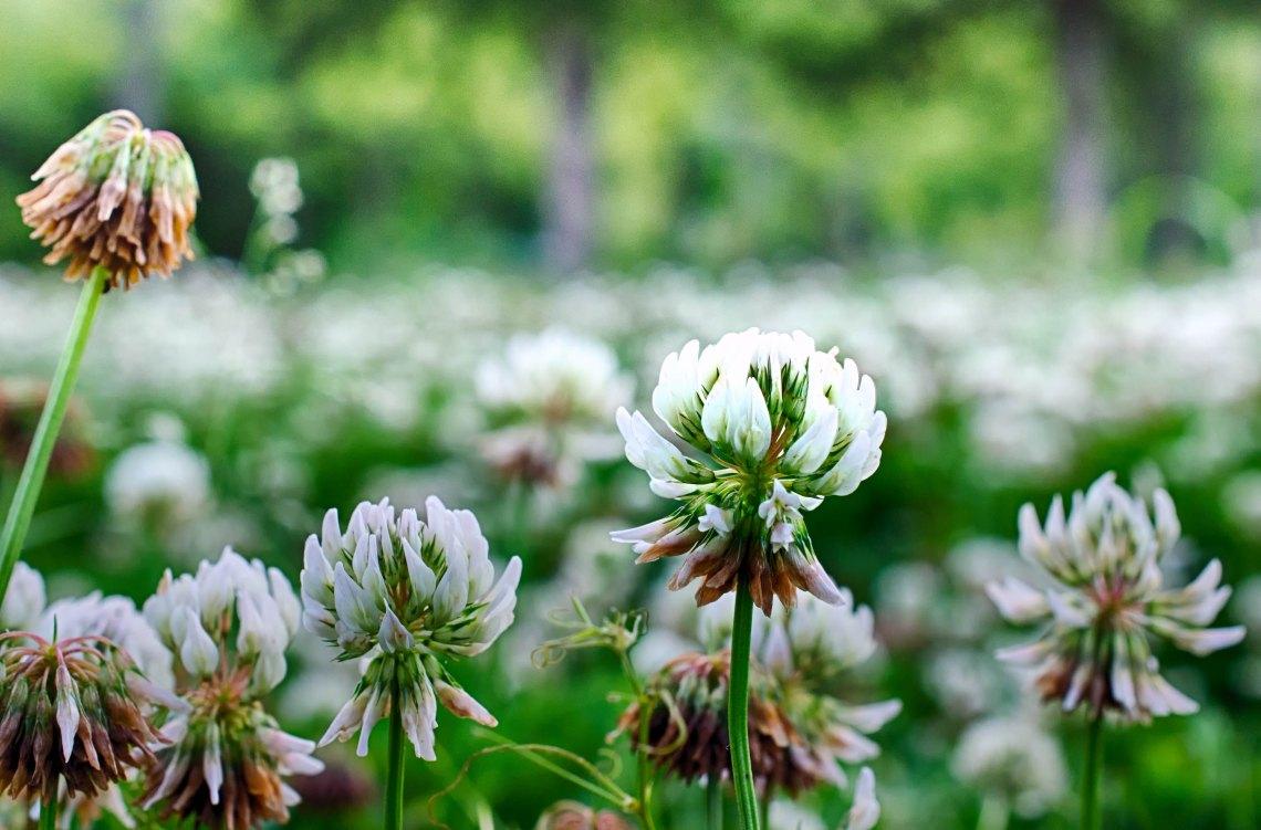 beautiful flowers in a field