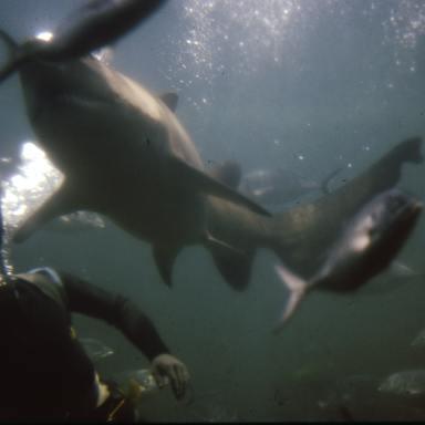 Nightmares At Sea: 25 People Describe Terrifying Encounters In The Deep, Dark Ocean