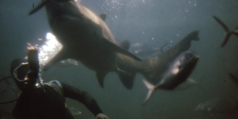 Nightmares At Sea: 25 People Describe Terrifying Encounters In The Deep, DarkOcean