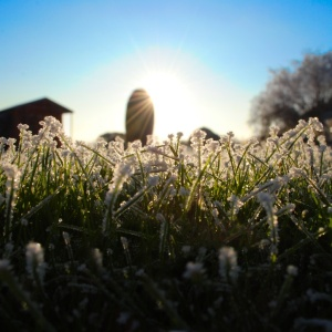 On Learning To Survive The Winter