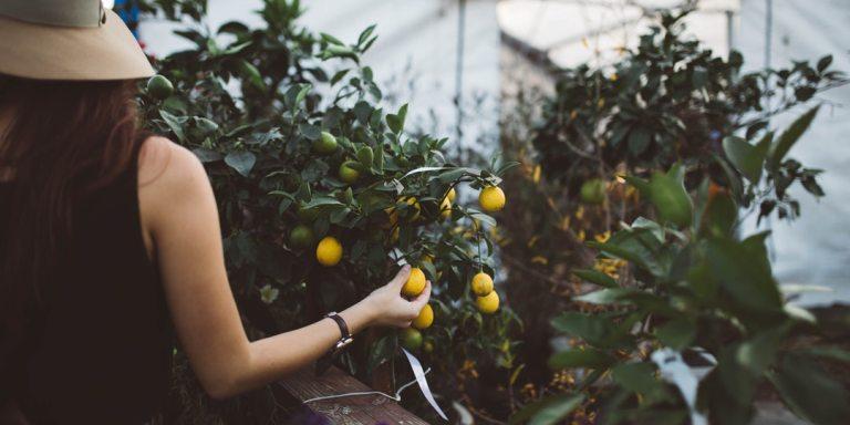 No Matter How Sour The Lemons, You Can Still MakeLemonade