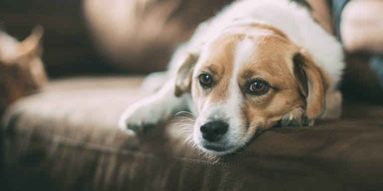 An Open Letter To The Dog Who Is No LongerMine