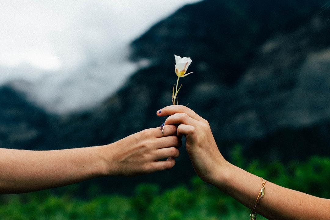 person holding white petaled flower