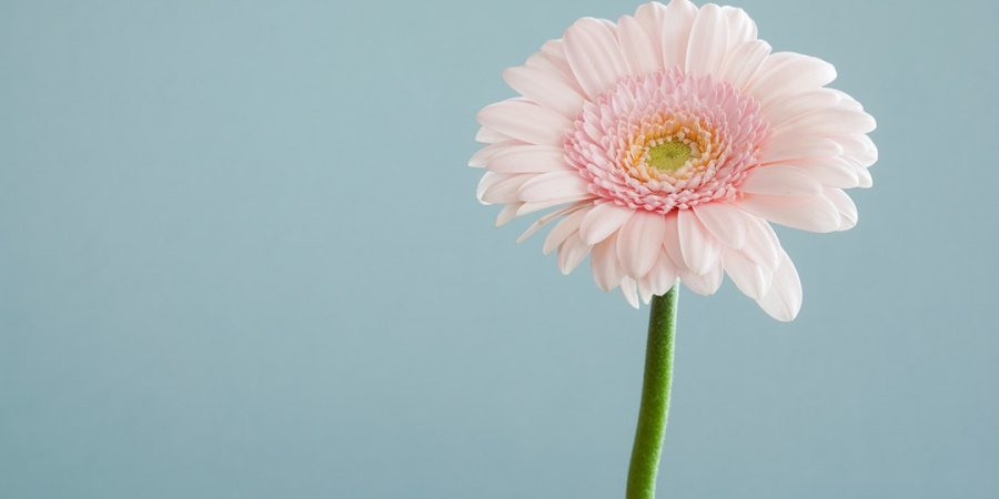 This Is A Flower ForYou