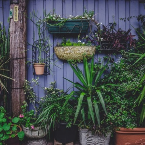 10 Reasons You Should Plant Your Own Garden