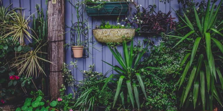 10 Reasons You Should Plant Your OwnGarden