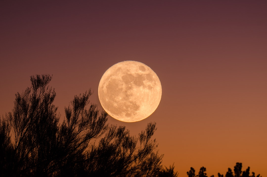 Moon in the center of photo against an orange, dusk sky and above trees