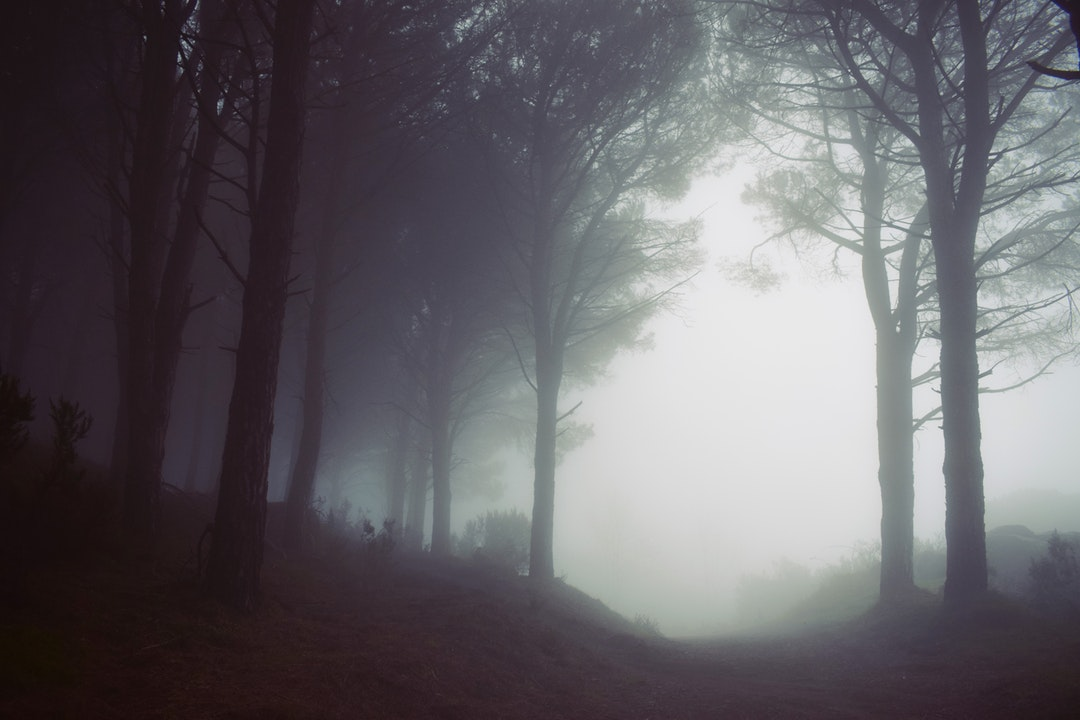 Fog at the edge of a forest in Monte Perone