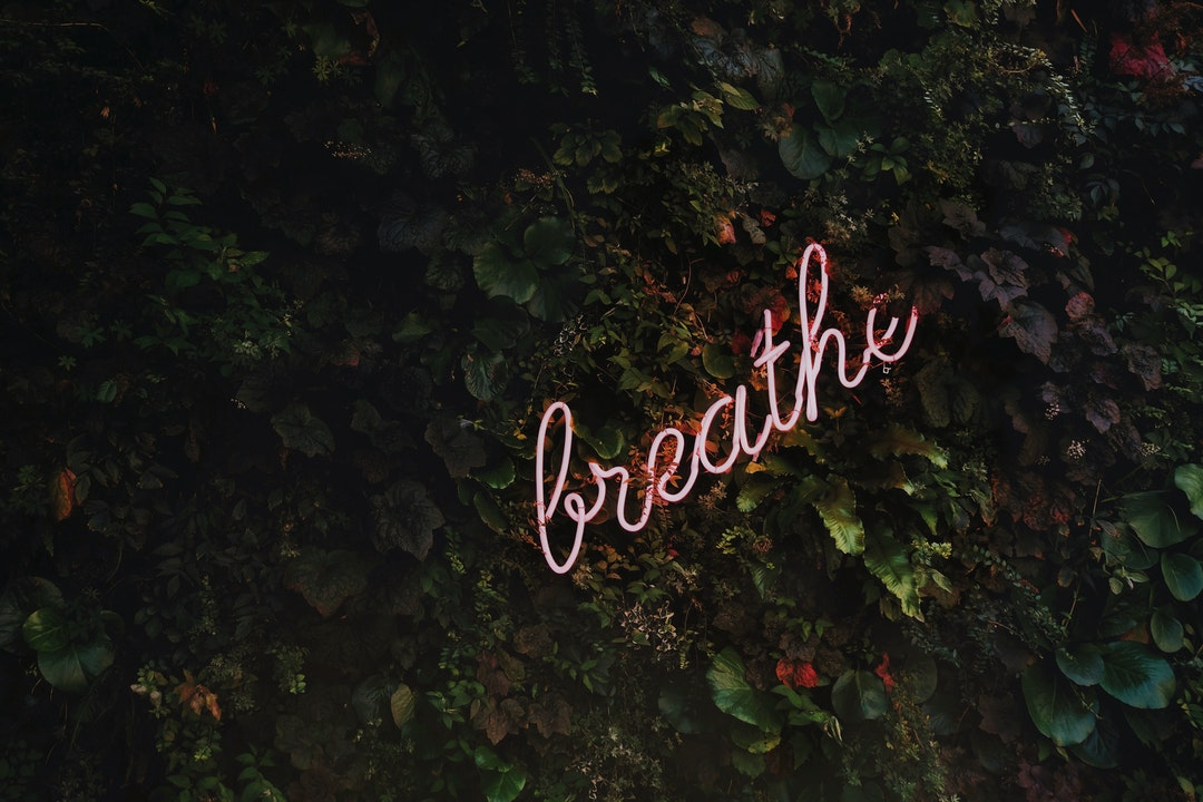 """A neon on a hedge reads """"breathe"""""""