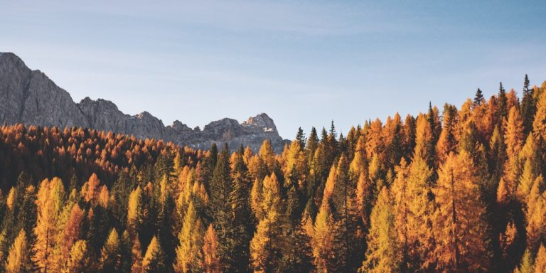 10 Simple And Fun Activities To Fall For ThisAutumn