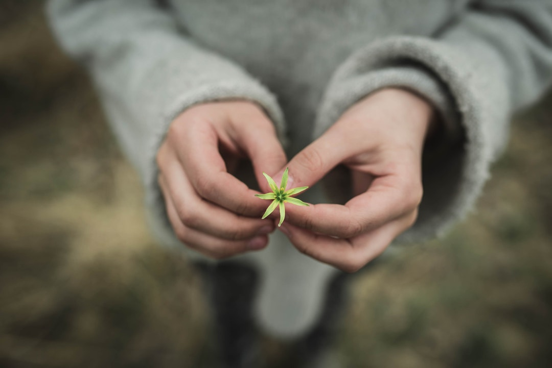 person holding white flower in shallow focus photography
