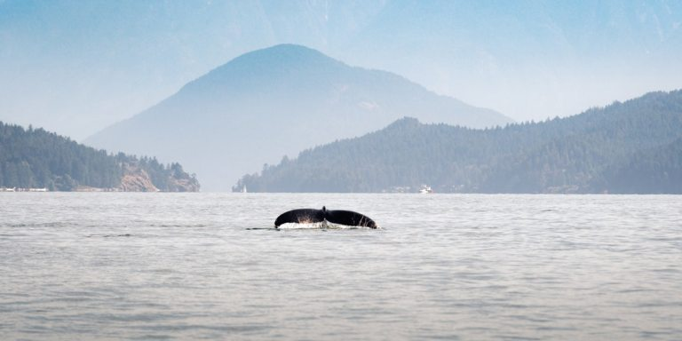 What The Loneliest Whale On Earth Can Teach Us About Perspective-Framing