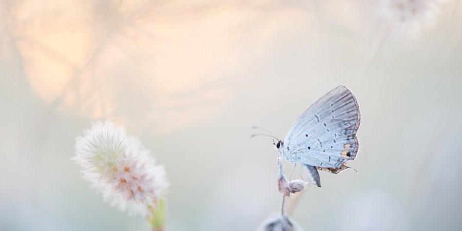 You Were My ButterflyEffect