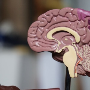 How Understanding The Science Behind The Mind Can Help You Live A Happier Life