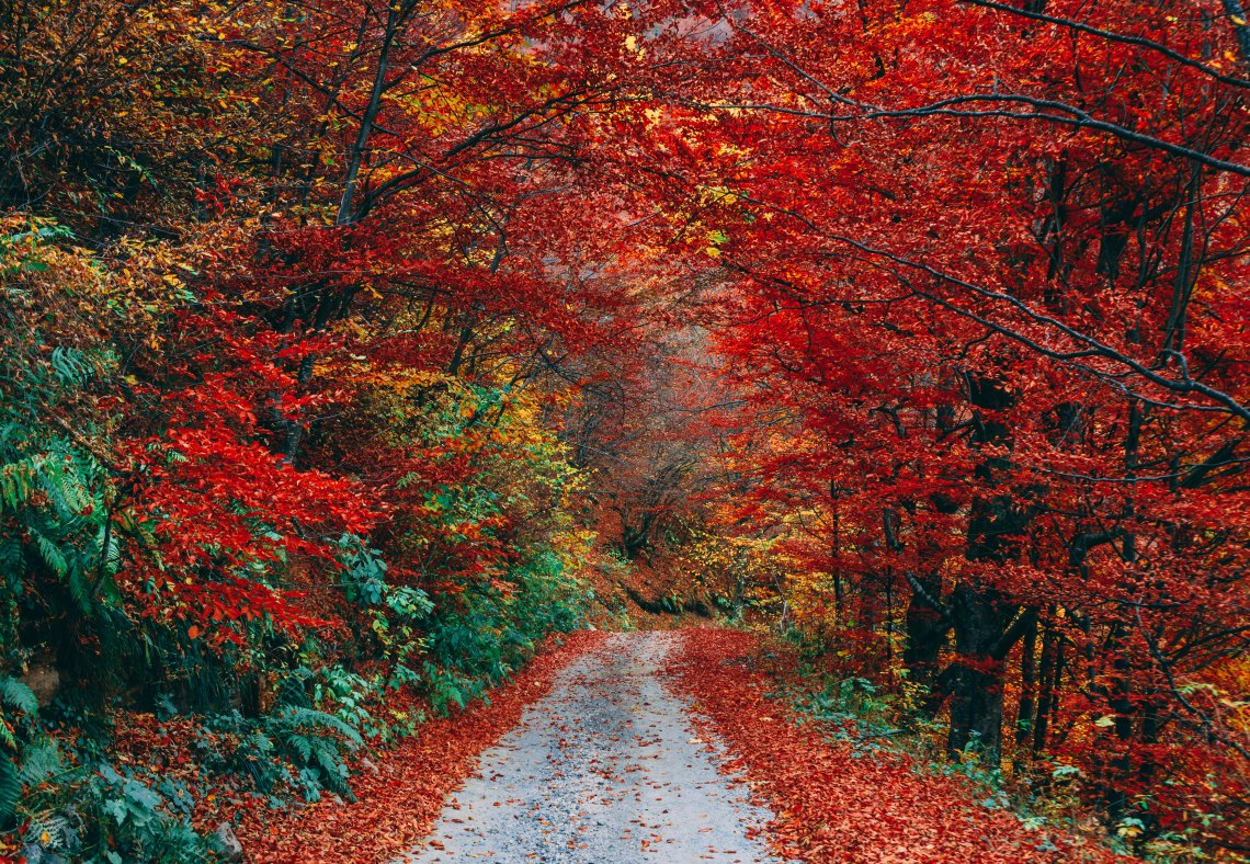 autumn leaves and a path