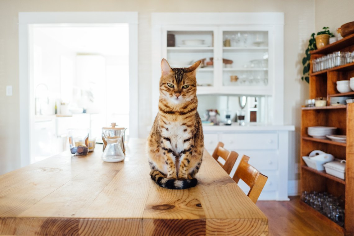 Cat sitting on table
